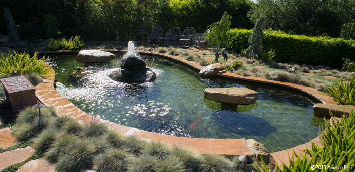 Macaluso pools fountains and ponds gallery pictures of for Pool converted koi